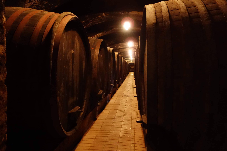 Maribor Wine 1